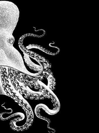 Octopus Black and White b