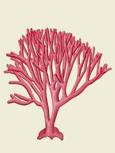 Red Corals 1 c by Fab Funky