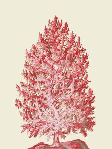 Red Corals 1 d by Fab Funky