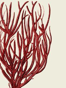 Red Corals 2 c by Fab Funky
