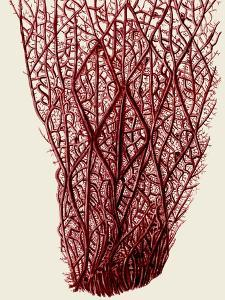 Red Corals 2 f by Fab Funky