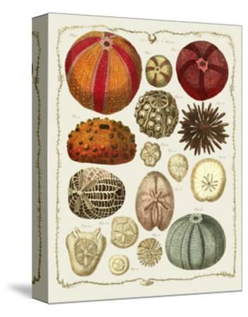 Starfish and Sea Urchins b