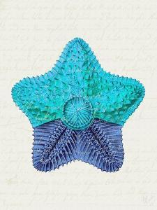 Starfish in Shades of Blue c by Fab Funky