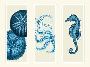 Three Panel Print Sea Urchin Starfish and Seahorse in Blue by Fab Funky
