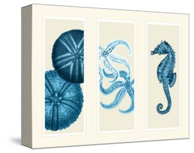 Three Panel Print Sea Urchin Starfish and Seahorse in Blue
