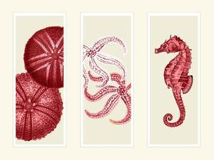 Three Panel Print Sea Urchin Starfish and Seahorse in Red by Fab Funky