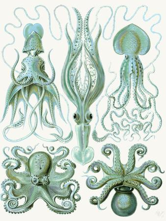 Turquoise Octopus and Squid b by Fab Funky