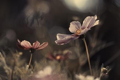 Flowers of innocence