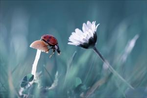 The Story Of The Lady Bug That Tries To Convice The Mushroom To Have A Date With The Beautiful Dais by Fabien Bravin