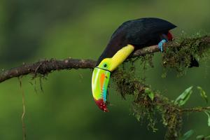 The Colors of Costa Rica by Fabio Ferretto