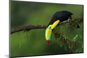 The Colors of Costa Rica by Fabio Ferretto