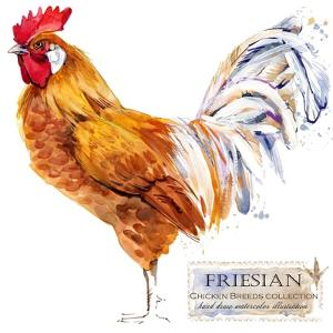 Friesian Rooster. Poultry Farming. Chicken Breeds Series. Domestic Farm Bird Watercolor Illustratio by Faenkova Elena