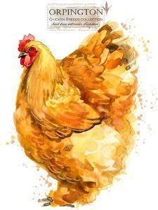 Orpington Hen. Poultry Farming. Chicken Breeds Series. Domestic Farm Bird by Faenkova Elena