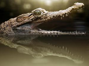 Croc by Fahmi Bhs