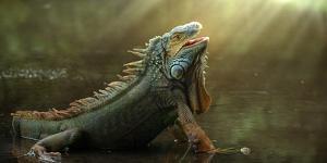 Morning Light by Fahmi Bhs