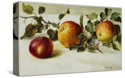 Book Illustration of Apples