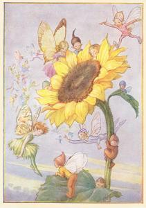 Fairies with Sunflower
