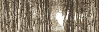 Fairytale Forest-Bill Philip-Art Print