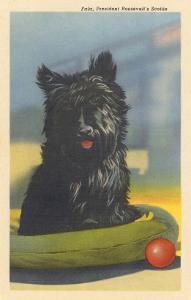Fala, Roosevelt's Scottie Dog