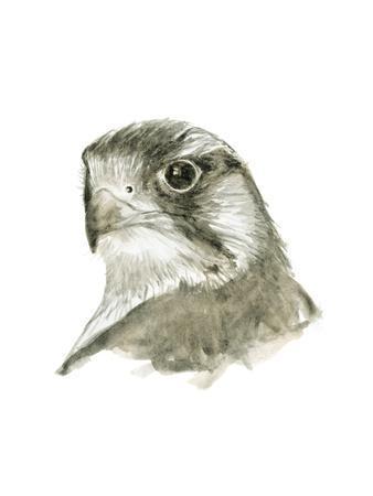 https://imgc.artprintimages.com/img/print/falcon-bust_u-l-q19c2yt0.jpg?p=0