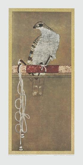 Falcon--Art Print