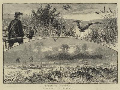 Falconry in England--Giclee Print