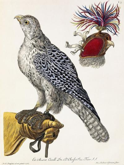 Falconry, Plate 3, from 'Deliciae Naturae Selectae', 1771-Georg Wolfgang Knorr-Giclee Print