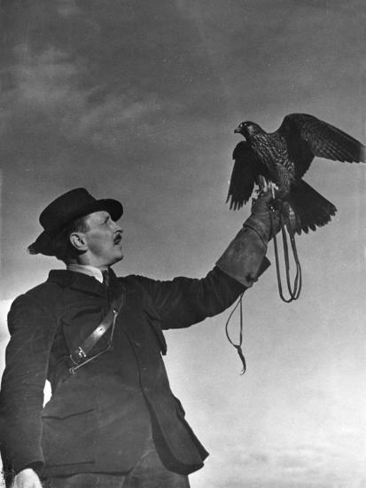Falconry: Showing Off--Photographic Print