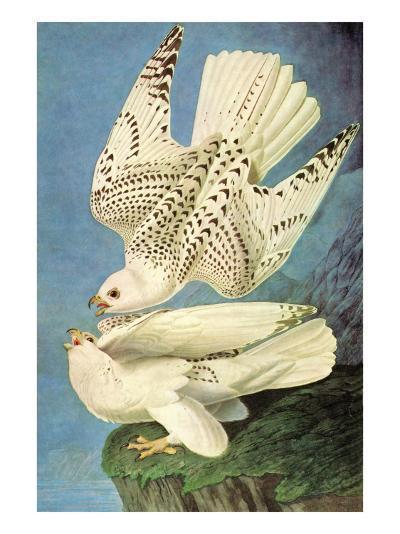 Falcons-John James Audubon-Art Print