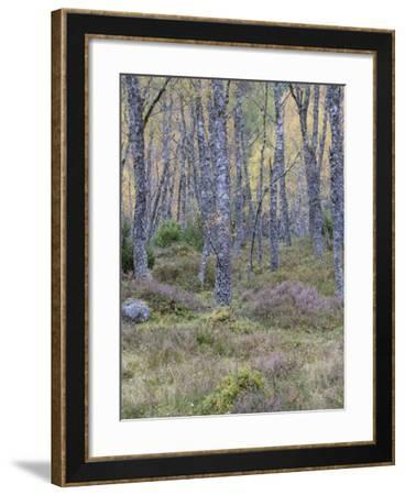 Fall Arriving 3-Doug Chinnery-Framed Photographic Print