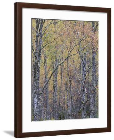 Fall Arriving 4-Doug Chinnery-Framed Photographic Print