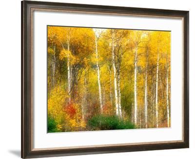 Fall Aspen Trees along Highway 2, Washington, USA-Janell Davidson-Framed Photographic Print
