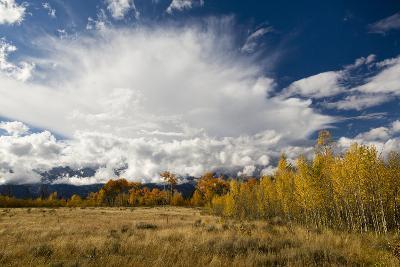 Fall Aspen Trees Decorating Jackson Hole, Grand Teton National Park, Wyoming-Mike Cavaroc-Photographic Print