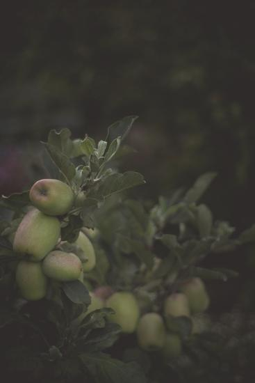 Fall Bloom And Harvest In An Organic Garden In Ventura, California-Rebecca Gaal-Photographic Print