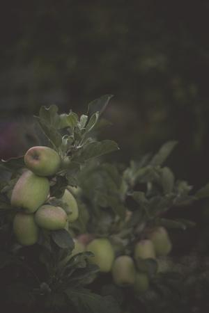 https://imgc.artprintimages.com/img/print/fall-bloom-and-harvest-in-an-organic-garden-in-ventura-california_u-l-q1basia0.jpg?p=0
