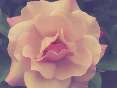 https://imgc.artprintimages.com/img/print/fall-bloom-and-harvest-in-an-organic-garden-in-ventura-california_u-l-q1bb7qp0.jpg?p=0