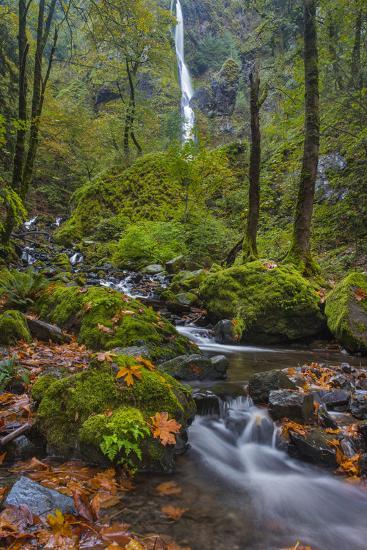 Fall Color Along Starvation Creek Falls, Columbia Gorge, Oregon-Chuck Haney-Photographic Print