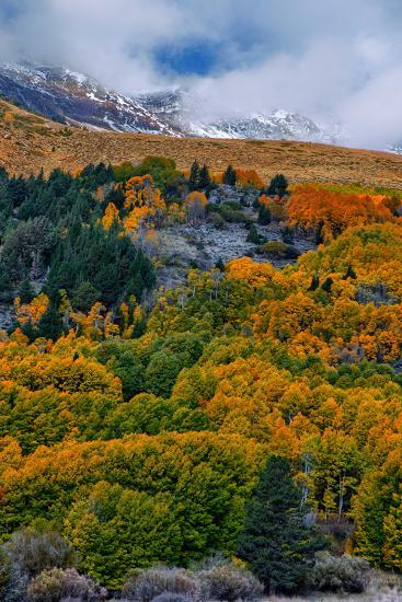 Fall Color and Stormy Skies in the Eastern Sierras, June Lake-Vincent James-Photographic Print
