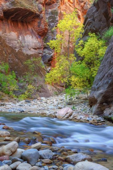 Fall Color in the Virgin Narrows-Vincent James-Photographic Print