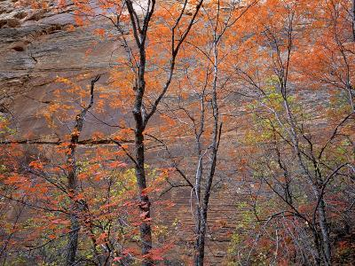 Fall Color in Zion National Park, Utah, USA-Diane Johnson-Photographic Print