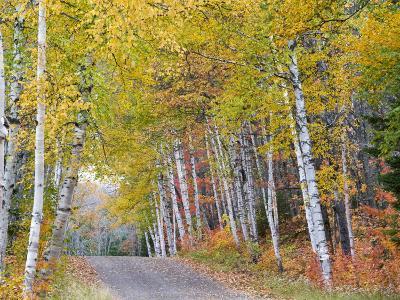 Fall Color Lines Gravel Road, Keweenaw Penninsula, Michigan, USA-Chuck Haney-Photographic Print
