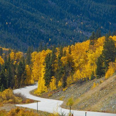 Fall Color of Aspen Trees and Evergreens Along Cottonwood Pass of Rocky Mountain National Park-Anna Miller-Photographic Print