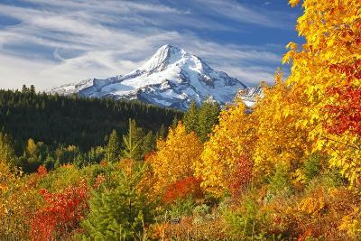 Fall Colors Add Beauty to Mt. Hood, Mt. Hood National Forest, Oregon,-Craig Tuttle-Photographic Print