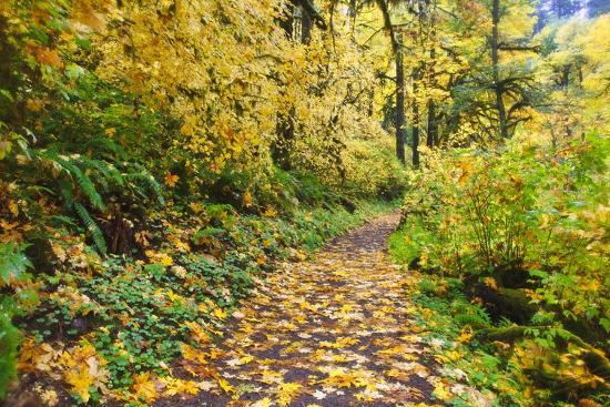 Fall Colors Add Beauty Trail, Silver Falls State Park, Oregon-Craig Tuttle-Photographic Print