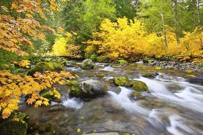 Fall Colors Along Santiam River, Willamette National Forest, Oregon Cascades, Pacific Northwest-Craig Tuttle-Photographic Print