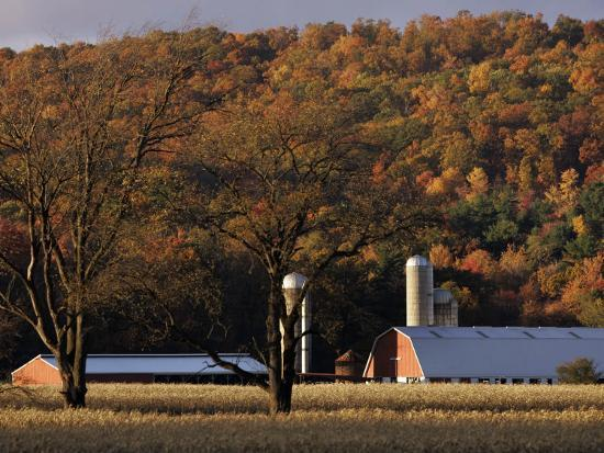 Fall Colors and a Field of Dried Soybeans in Pleasant Gap, Pennsylvania, October 20, 2006-Carolyn Kaster-Photographic Print