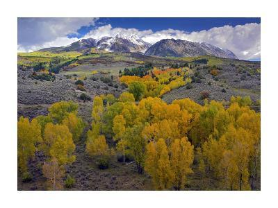Fall colors at Chair Mountain, Colorado-Tim Fitzharris-Art Print