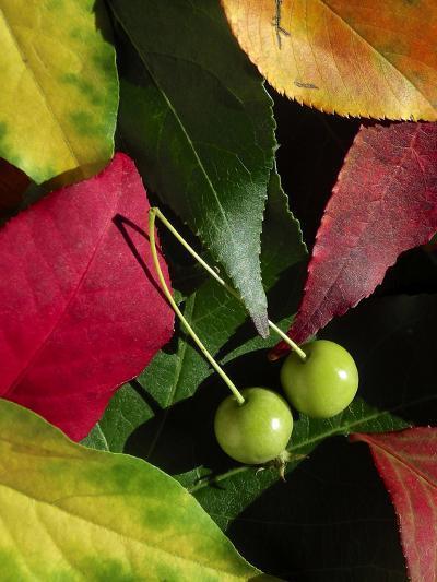 Fall Colors I-Monika Burkhart-Photographic Print