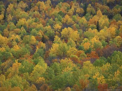 Fall Colors in a Northern Hardwoods Forest, Maine, USA-Jerry & Marcy Monkman-Photographic Print