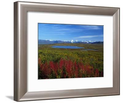 Fall Colors in an Alaskan Field, Alaska-Nick Norman-Framed Photographic Print